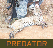 home-featured-predator